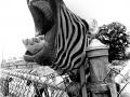 new site-pjb rwp laughing zebra 4x5-Edit